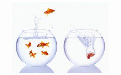 Taking a Leap of Faith